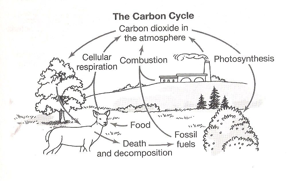 The Carbon Cycle Coloring Page Worksheet Carbon Cycle