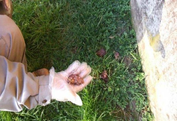 Teneri cuccioli Notizie: Uccisi un cane e due gatti da polpette avvelenate/...