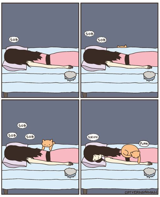 Should Your Cat Sleep In Your Bed Cat Vs Human Cat Sleeping Cat Purr