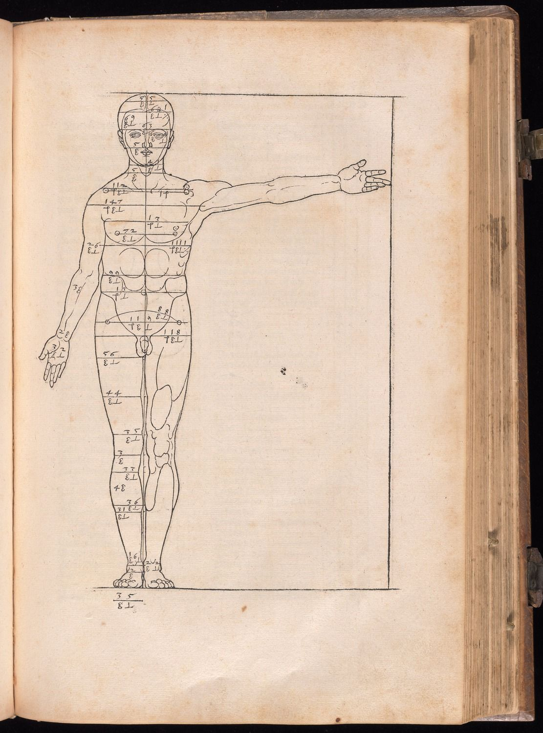 Albrecht Durer's resource for human proportions, available