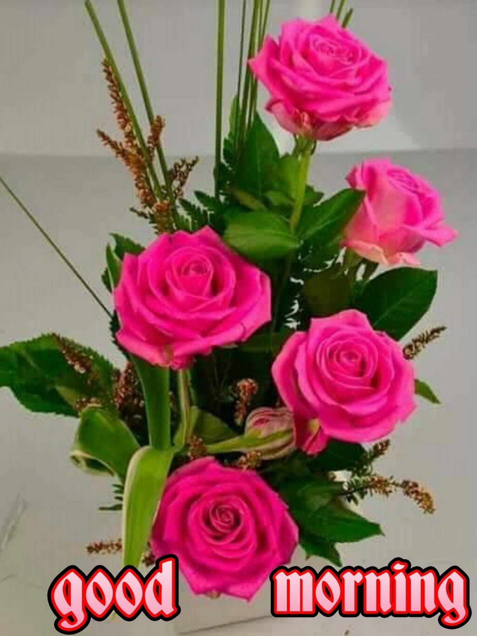 Good Morning Kishor Ekatpure Google Good Morning Rose Images Good Morning Flowers Lovely Good Morning Images