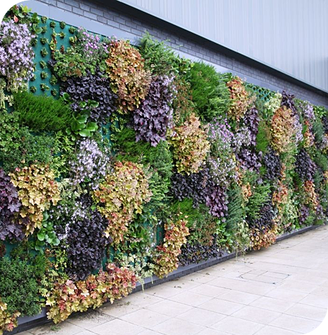 Living Wall System, Living Wall Planter, Green Wall System | Suite Plants