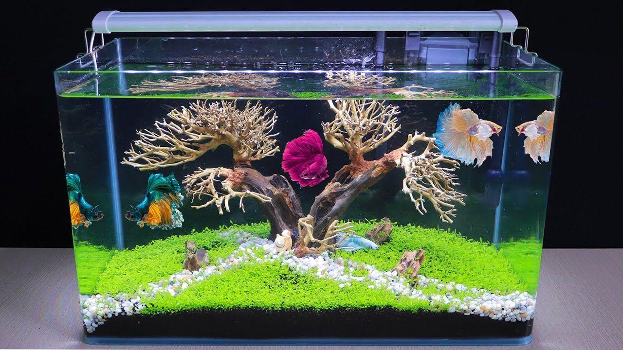 How To Make Bonsai Aquatic Planted Aquarium Diy Aquascape No Co2 For Betta Fish Tank Youtube Fish Tank Themes Betta Fish Diy Fish Tank