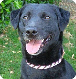 Red Bluff, CA - Labrador Retriever Mix. Meet CARA a Dog for Adoption.