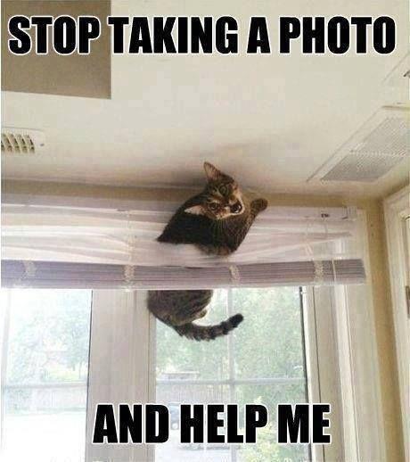 #FunnyKitty
