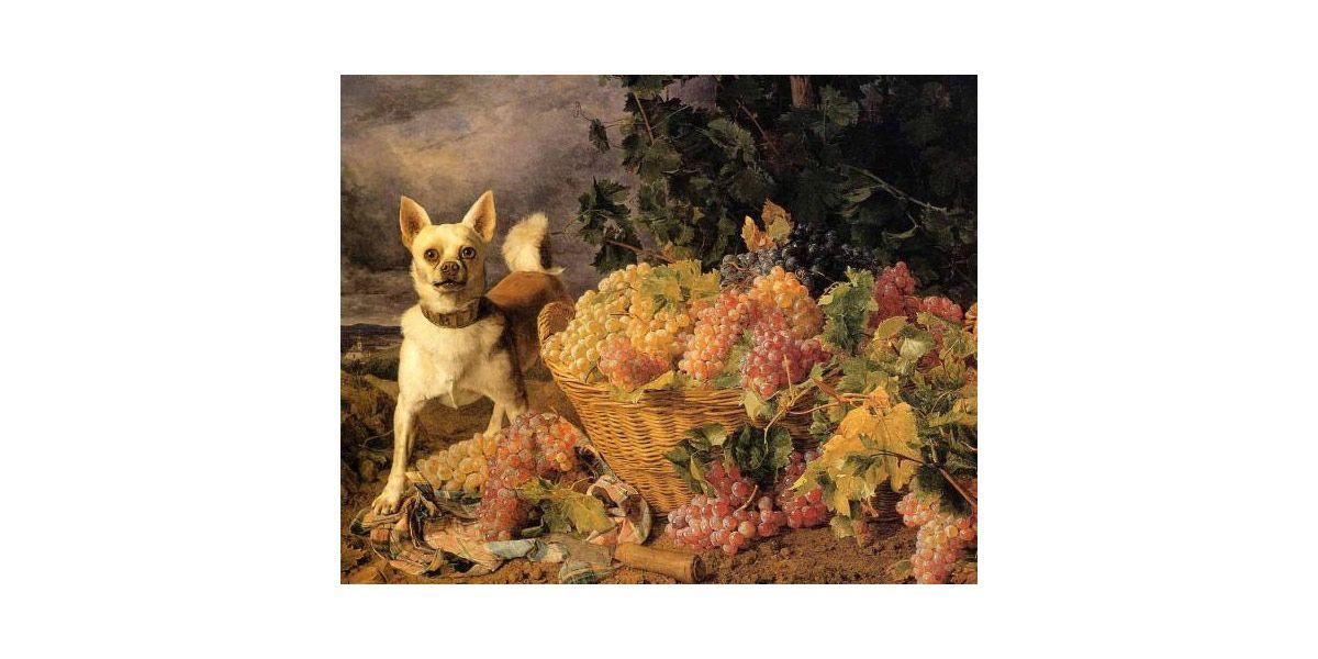 Собака с корзиной винограда на фоне пейзажа
