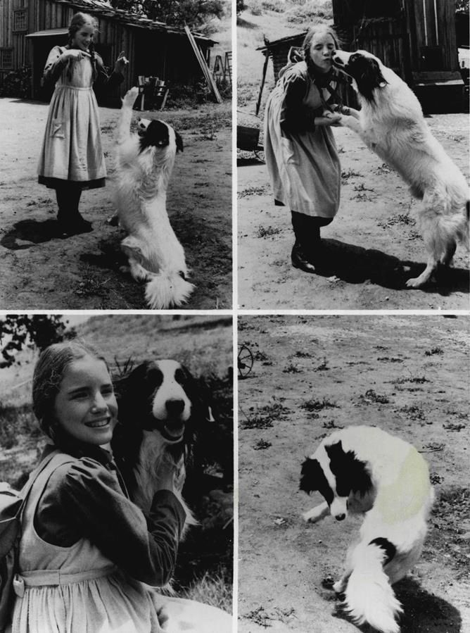 Little House On The Prairie Laura And Her New Dog Bandit Jack Died