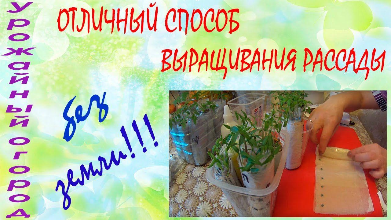 выращивание рассады без пересадки