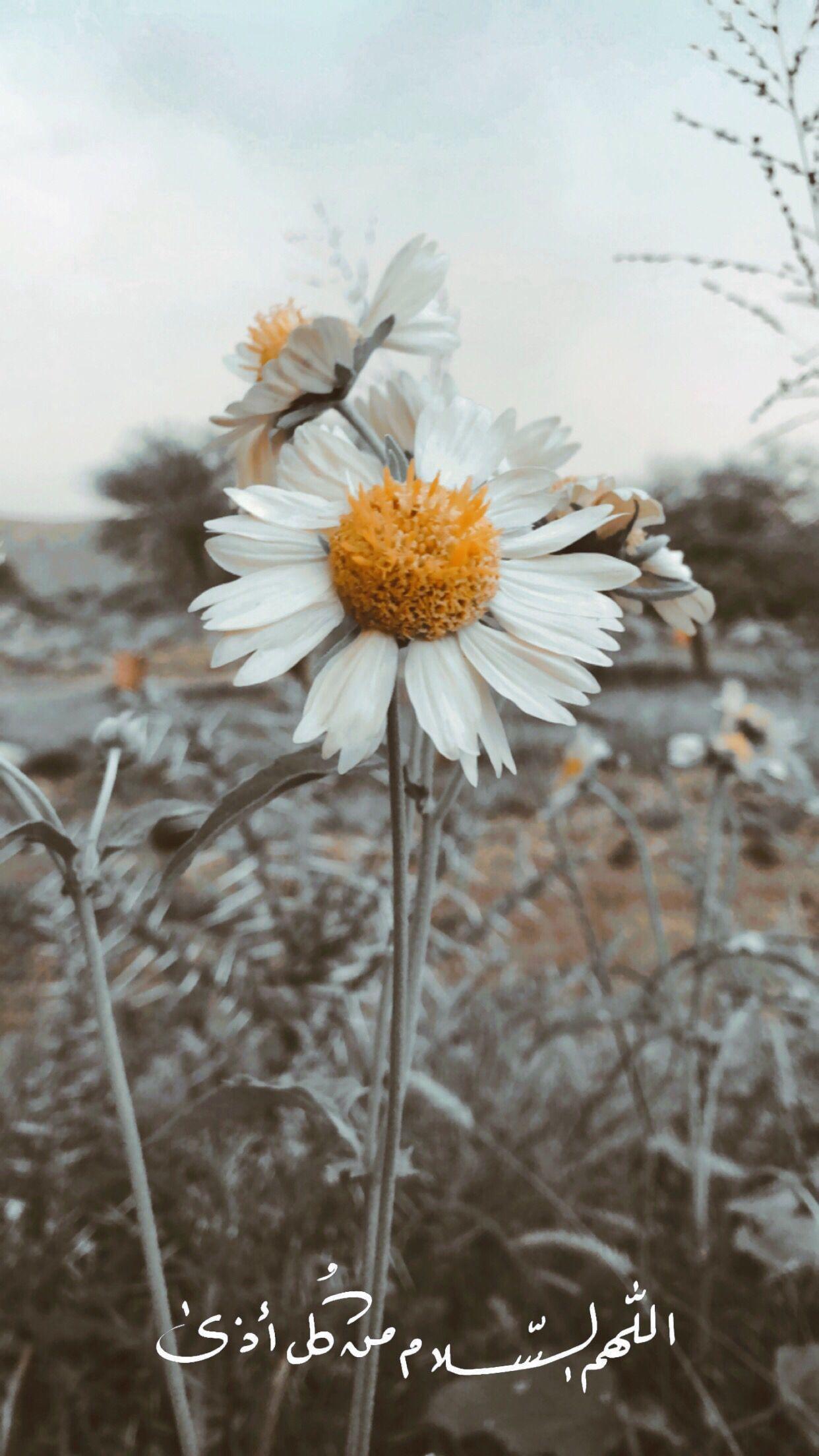 اللهم السلام من كل أذى Landscape Photography Tumblr Photography Quran Wallpaper