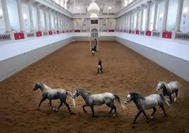 Resultado de imagen de escuela española de equitación ,viena