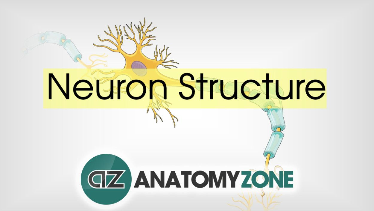 Anatomy Zone Is An Awesome Resource Neuroscience Pinterest 3d
