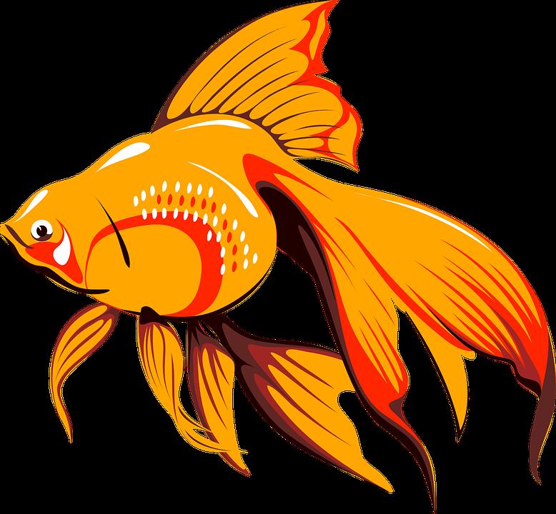 Free Image On Pixabay Goldfish Fish Tank Water Free Clip Art Golden Fish Fish Art