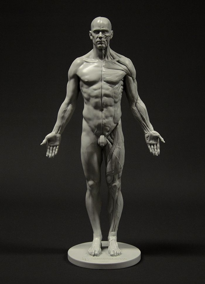 figure drawing reference models male - Google Search | Bodies ...