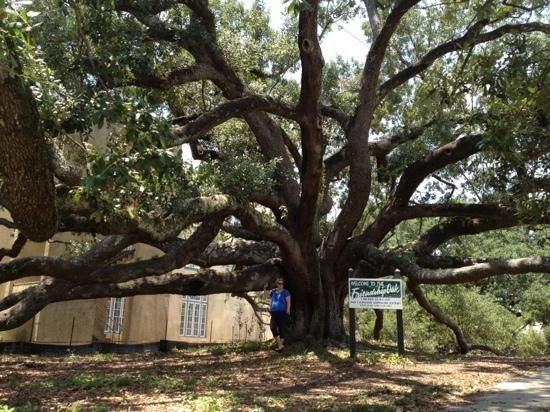 The Friendship Oak In Biloxi Some Claim Its The Oldest Tree In