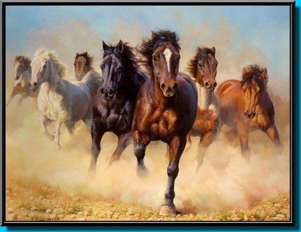 Chevaux sauvages mustangs chevaux pinterest chevaux - Dessin de chevaux sauvage ...