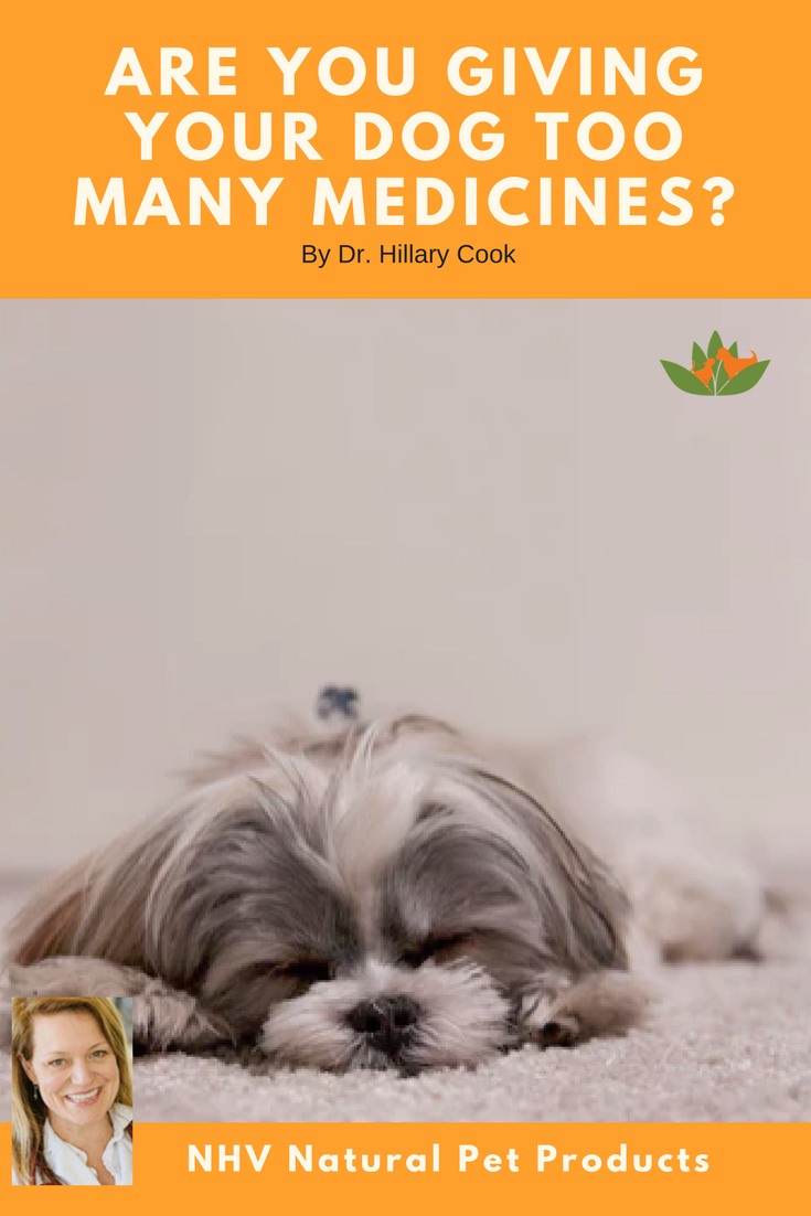 Herbal Remedies For Pets What Is It And How Does It Work