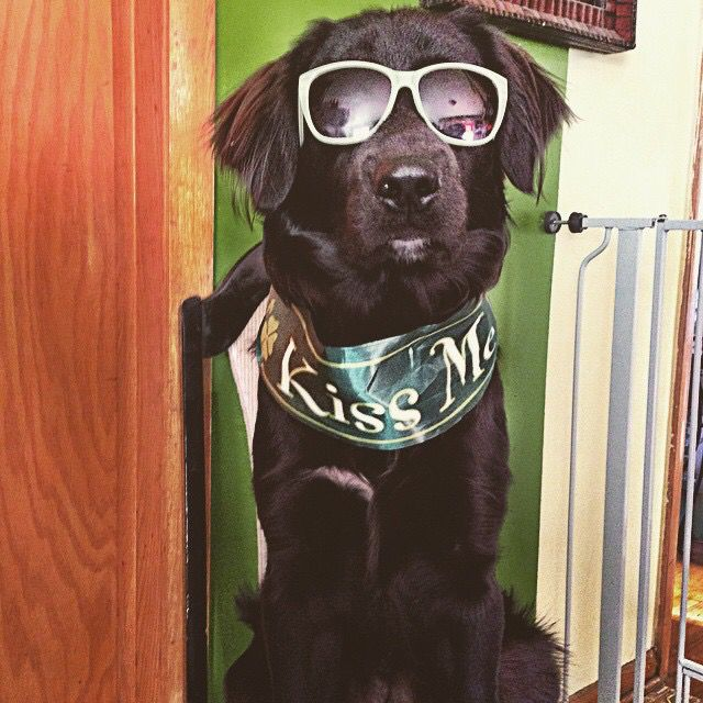 My pup Ryder St. Patty's Cool
