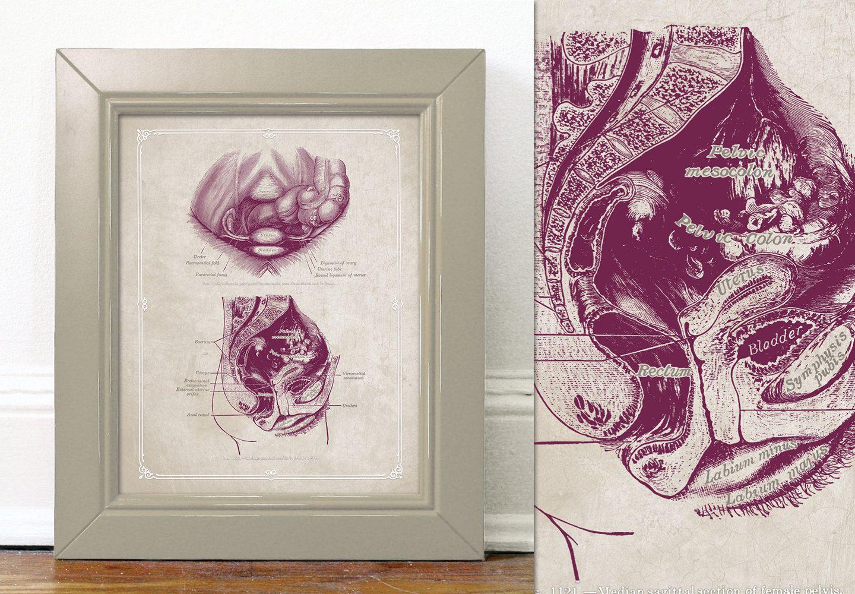 Grays Anatomy Female Pelvis Reference Chart Education Poster Uterus ...
