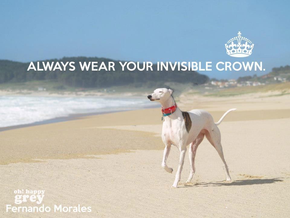 Wear Your Invisible Crown Greyhound Adoption Grey Hound Dog Greyhound