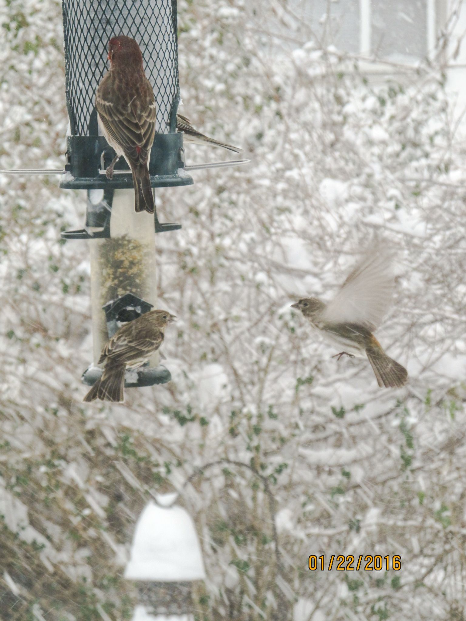 Flying during a snowstorm