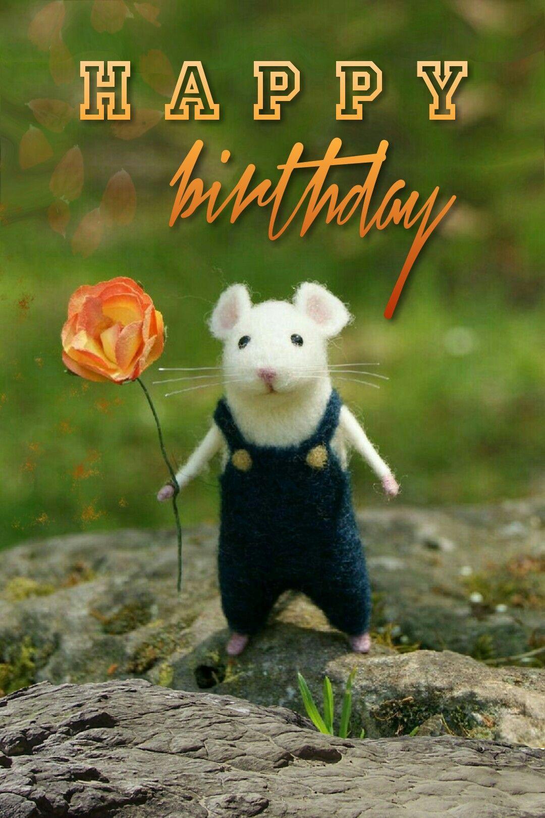 Happy Birthday Birthday wishes funny, Cool birthday