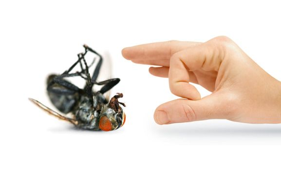 Are Landlords Responsible For Bed Bugs Termite Control Best Pest Control Pest Control
