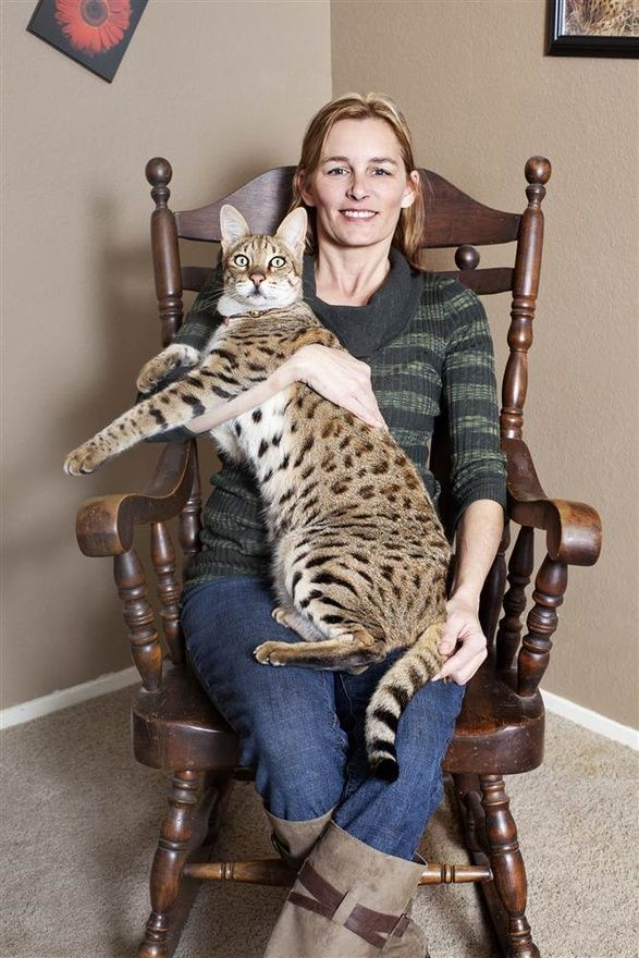 guinness world records 2013 tallest cat