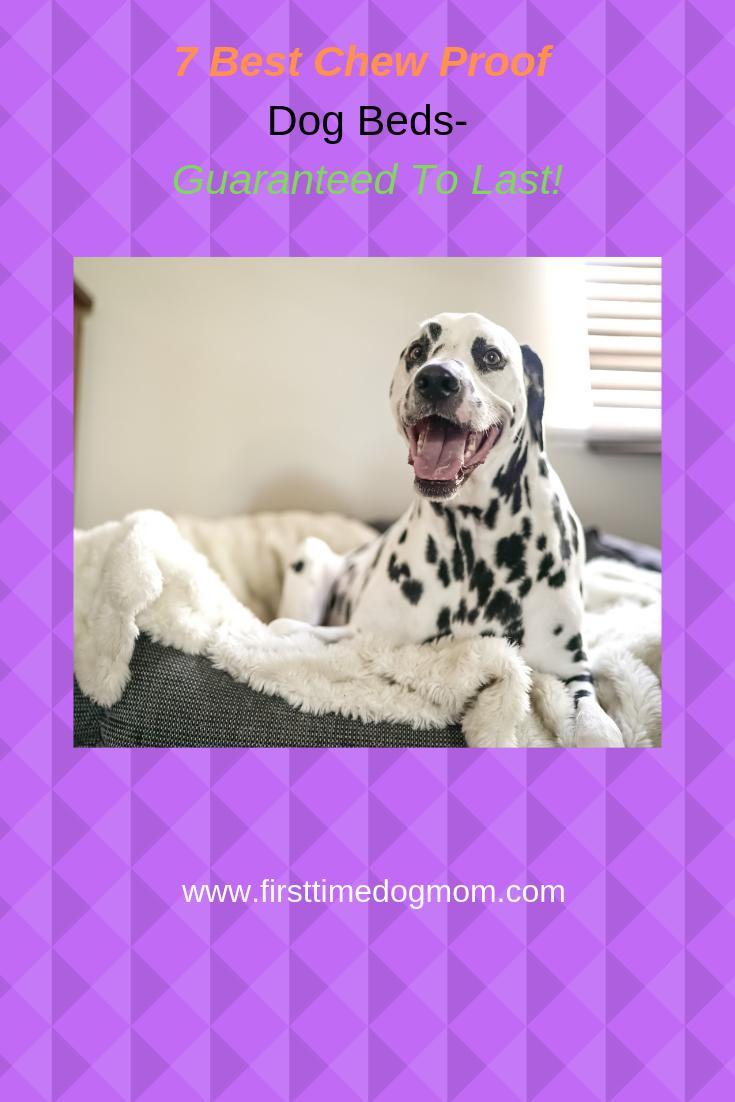 Chew Proof Dog Beds Chew proof dog bed, Dog bed, Chew