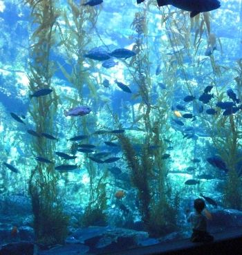 Birch Aquarium ~ A Worthwhile Alternative to SeaWorld San