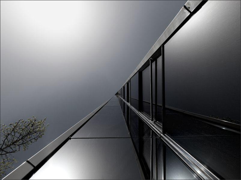 Tree in DarkLight by KPK