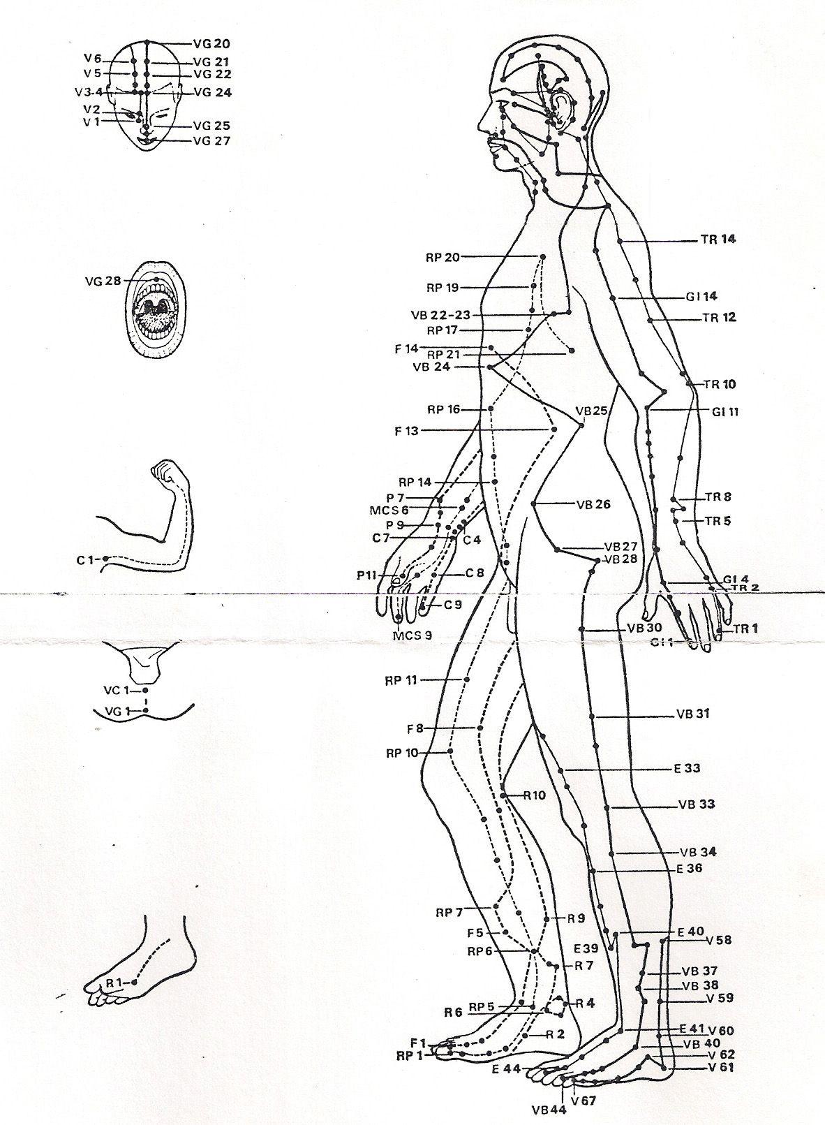 Assez Les méridiens et points de la medecine chinoise, vue de profil  WV19