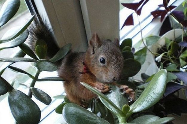 Soldier Rescued A Baby Squirrel And Now They Re Best Friends Animali Scoiattolo Illustrazioni