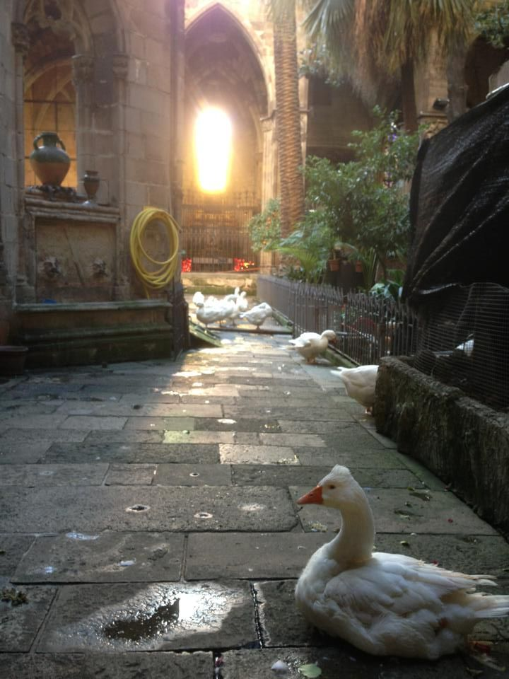 geese at gothic cathedral