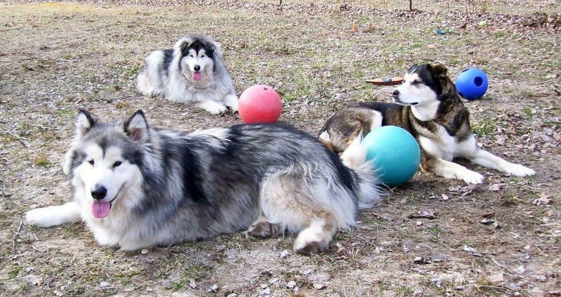 Adopt Skye on Puppies, Adoption, Animals