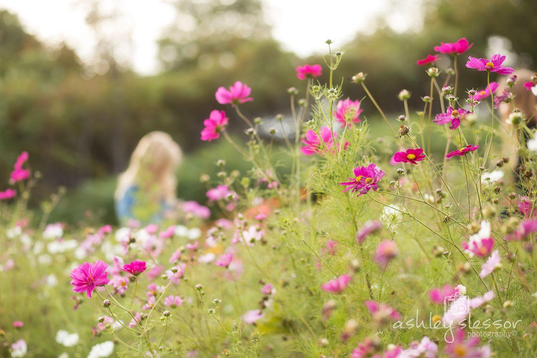 #flowerfarm #farmerflorist Deep in the Cosmos. Image by @AshleySlessor
