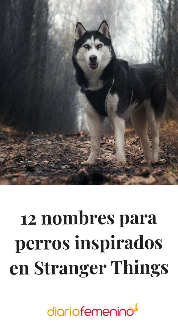 12 Nombres Para Perros Inspirados En Stranger Things Nombres Para Perros Husky Nombres Para Perros Machos Nombres De Perros