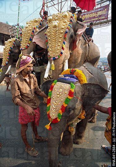 Elephant Head Dresses Decorated Kerala Elephant Painted