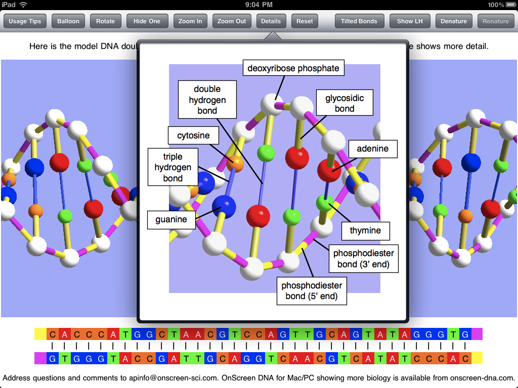 3d dna model project high school google search random 3d dna model project high school google search ccuart Images