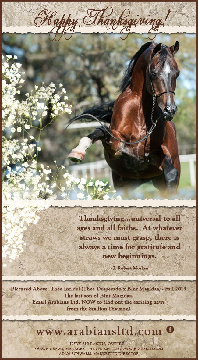 Happy Thanksgiving From Thee Stallions Of Arabians Ltd