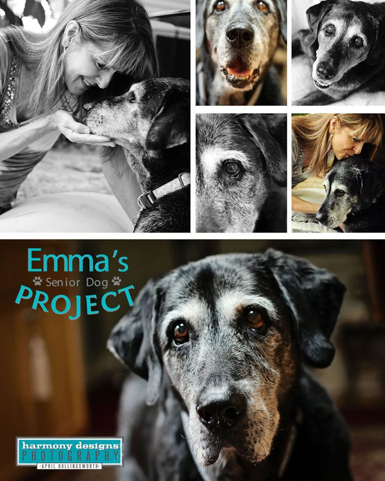 Emma's Senior Dog Project. Agape Animal Rescue. Pet