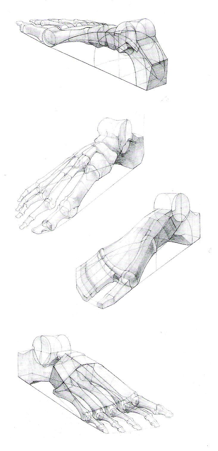 Foot leg paw claw 20 feet pinterest dessin dessin anatomie and dessin personnage - Dessin de course a pied ...