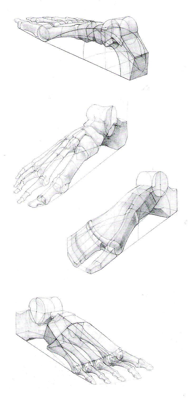 Foot Leg Paw Claw 20 Ohbody Pinterest Legs Anatomy And