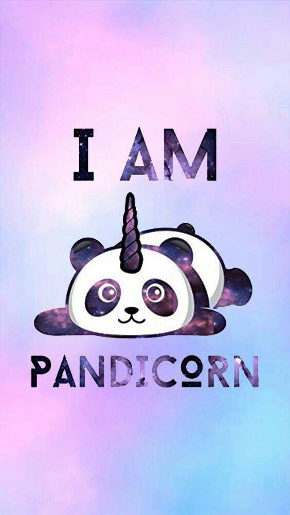 So Cute Madison In 2019 Panda Wallpapers Kawaii