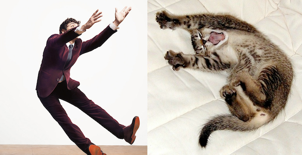 LOL Male Models Paired With Cats That Look Like Them