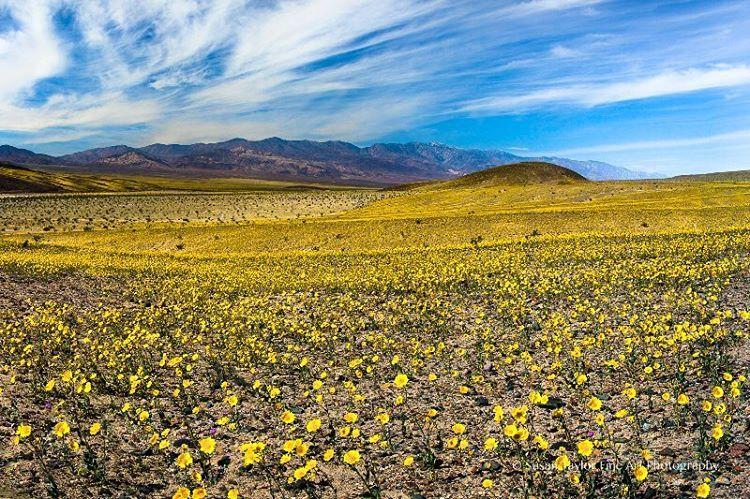 Instagram Death valley flowers, Sierra nevada mountains