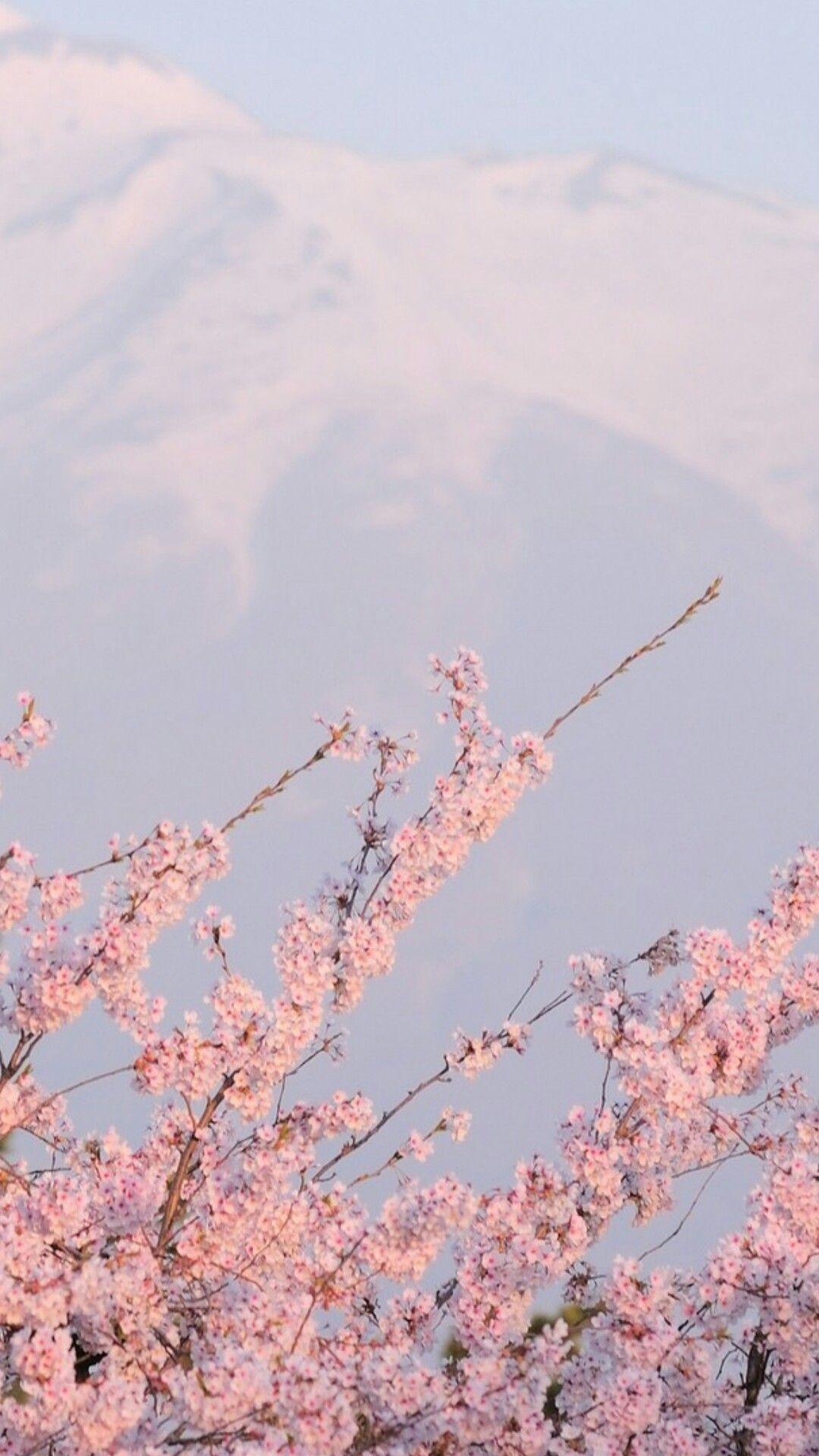 Sackgasse Aesthetic Backgrounds Pink Aesthetic Flower Aesthetic