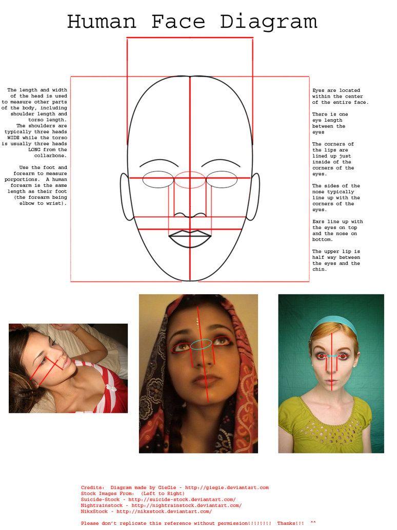 human face diagram by giegie on deviantart [ 774 x 1032 Pixel ]