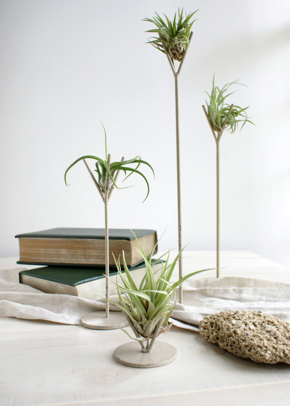 Introducing our distressed air plant stands tabletop tillandsia air plant holder featuring a modern forked stand and polish finishing with tillandisa air