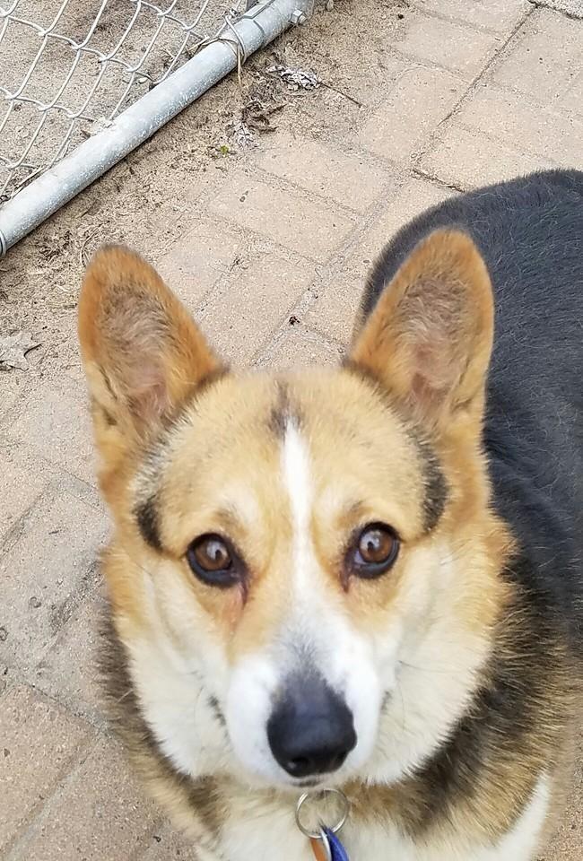 Adopt Gracie on (med billeder)