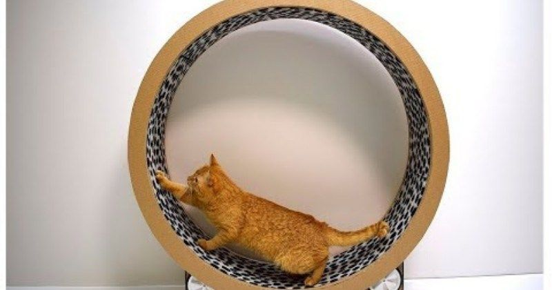 Make Your Cat An Exercise Wheel From Cardboard